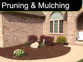 Pruning and Mulching
